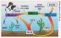 臭氧对水中微生物杀菌(一)